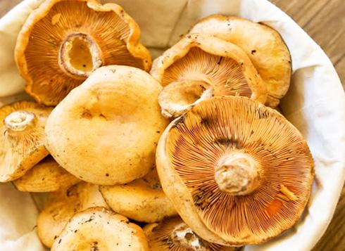 В каком виде лучше заморозить грибы на зиму