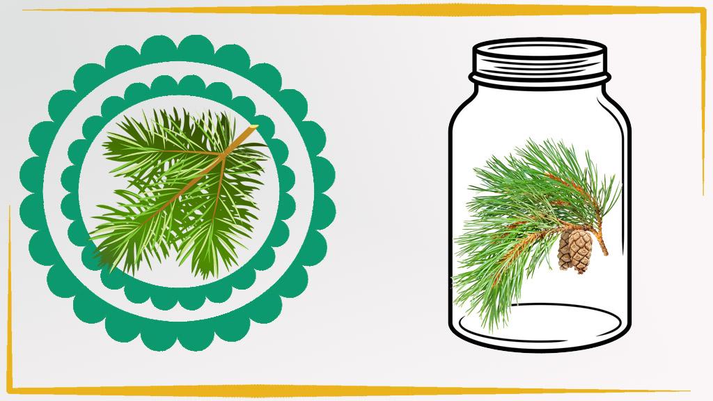 Варенье от простуды из сосновых иголок