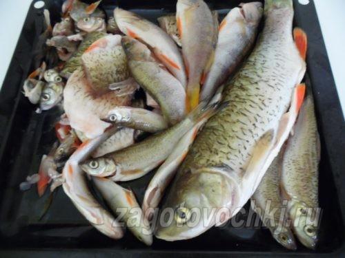 речная рыба для консервы