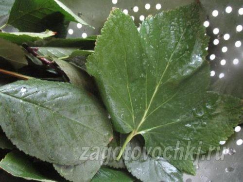 листья смородины и вишни