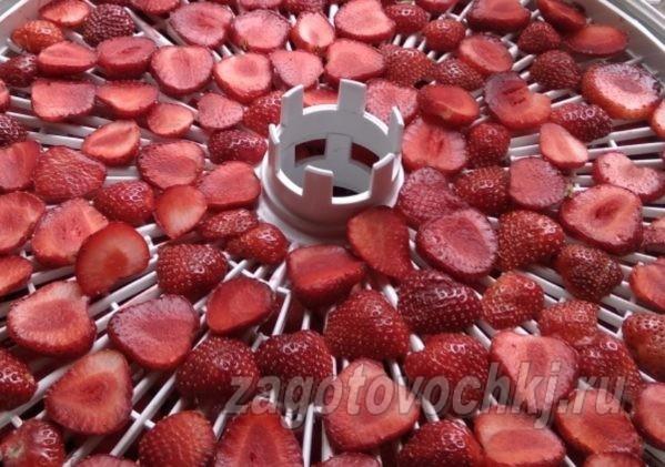 как сушить клубнику с сушилке